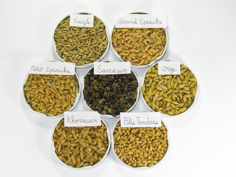 différentes espèces de graines